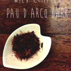 pau d arco bark wild crafted