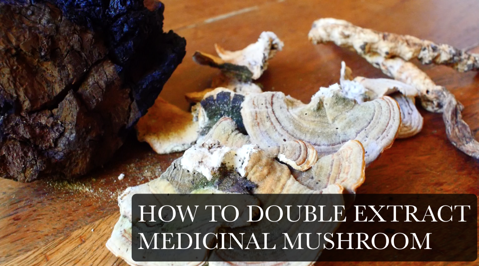 how to double extract medicinal mushroom